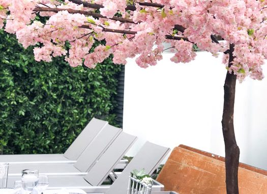 San Diego Tree Rentals - Cherry Blossoms