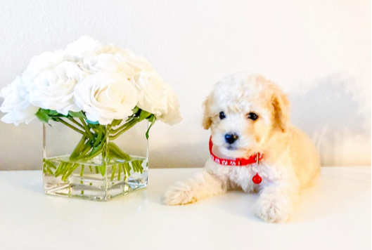 3 Tips if Your Dog is the Ring Bearer