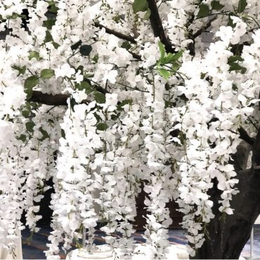 Wisteria Tree Rental